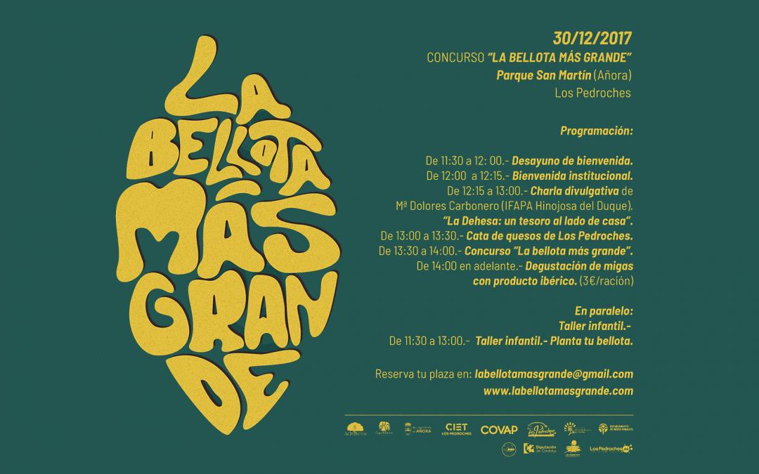 Publicado el cartel oficial del concurso «La Bellota más Grande»