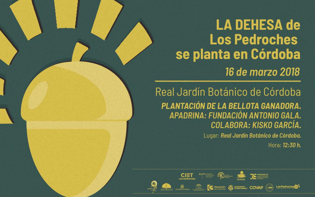 La Bellota Más Grande de Los Pedroches se plantará en el Real Jardín Botánico apadrinada por la Fundación Gala